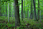 Buchenwald (Waldfriedhof - sowjetisches Speziallager)